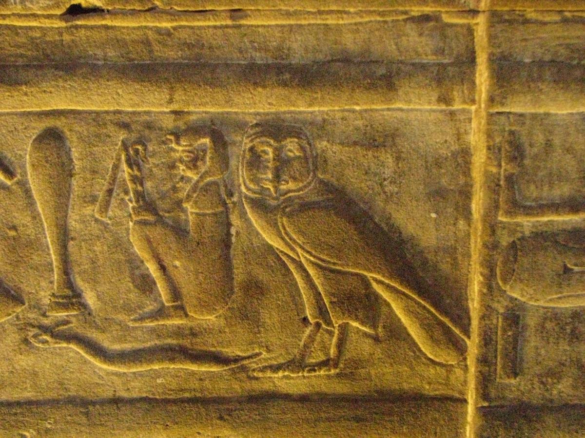 Kié az egyiptomibagoly?