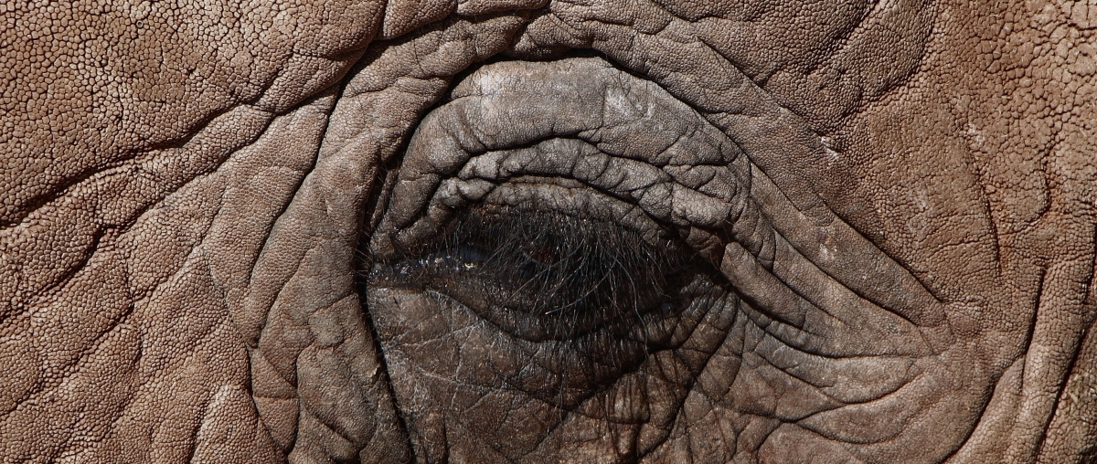 Az elefánt és ahalál
