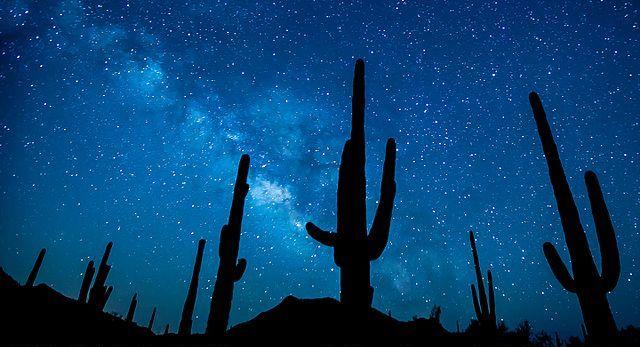 Sonorai kaktuszok sziluettje csillagos ég előtt