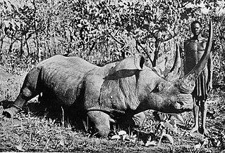 Elejtett orrszarvú egy 1920-as fényképen