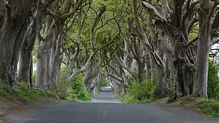 Összeboruló fák sötétjében vezető út Írországban